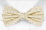 SWANKY Champagne pre-tied bow tie